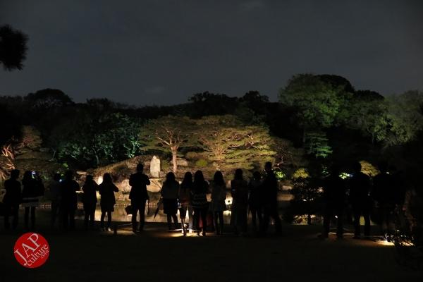 Weeping cherry tree (Shidarezakura) in Rikugien illumination attracts many people.0012