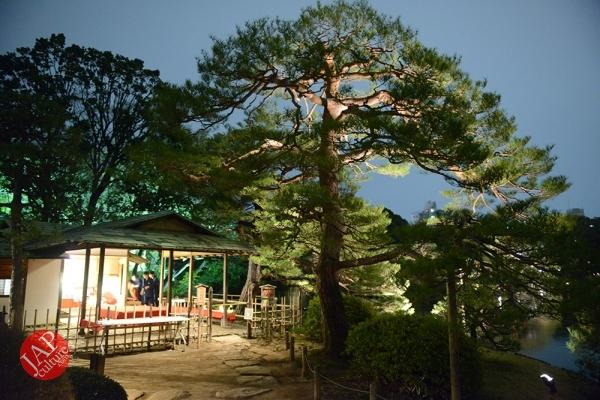 Weeping cherry tree (Shidarezakura) in Rikugien illumination attracts many people.0019