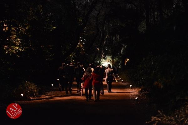 Weeping cherry tree (Shidarezakura) in Rikugien illumination attracts many people.0034