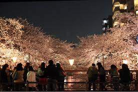 Photo of Cherry blossom festival @ Meguro river is good for street party