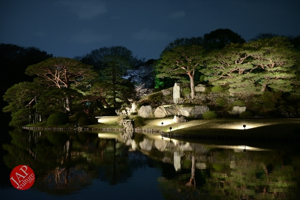 Weeping cherry tree (Shidarezakura) in Rikugien illumination attracts many people.0013